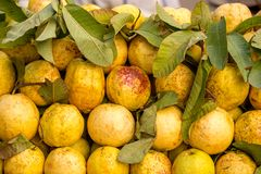Fresh guava fruits in asian market, India Stock Image