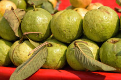 Fresh guava fruits Stock Images