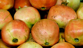 Fresh guava Royalty Free Stock Photo