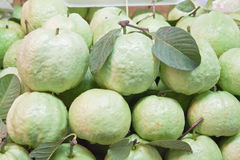 Fresh guavas with green leaf Stock Photo