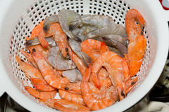 Fresh gulf shrimps Stock Images