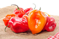 Fresh habanero peppers on burlap Royalty Free Stock Photography