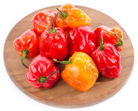 Fresh habanero peppers on cutting board Stock Images