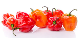 Fresh habanero peppers Royalty Free Stock Photography