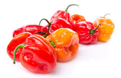Fresh habanero peppers Stock Photography