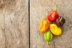 Fresh habanero peppers, Royalty Free Stock Photo