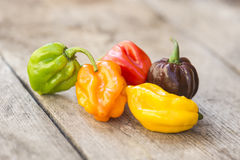 Fresh habanero peppers Royalty Free Stock Image