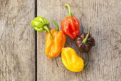 Fresh habanero peppers, Royalty Free Stock Images
