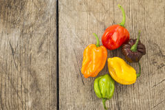 Fresh habanero peppers Stock Image