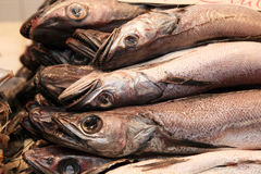 Fresh hake Royalty Free Stock Images