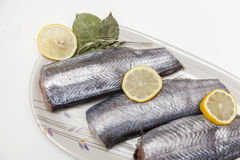 Fresh hake fillets Stock Photography