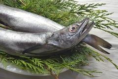 Fresh hake fishing hook Stock Photo