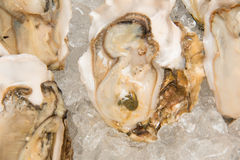 Fresh half-shell oyster on ice Stock Image