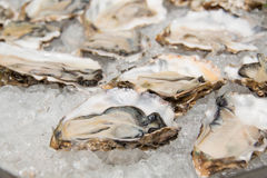 Fresh half-shell oyster on ice Stock Photography