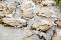 Fresh half-shell oyster on ice Stock Images