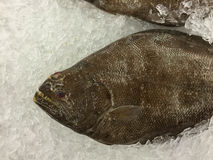 Fresh Halibut fish on ice. In fish market stock photography