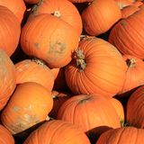 Fresh Halloween Pumpkins on Farmers Market stock photography