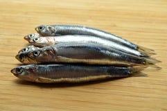 Fresh hamsi fish Stock Images