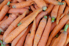 Fresh hand picked organic carrots Royalty Free Stock Images