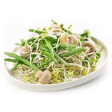 Fresh haricot vert salad with radish sprout and mushrooms. Served on a white plate royalty free stock photos