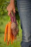 Fresh harvest Stock Photography