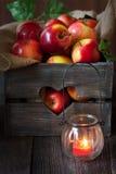Fresh harvest of apples. Stock Photos