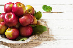 Fresh harvest of apples.Nature fruit concept. Stock Photography
