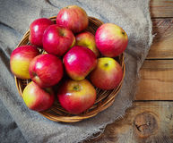 Fresh harvest of apples.Nature fruit concept. Royalty Free Stock Photo