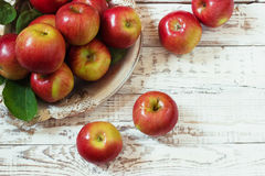 Fresh harvest of apples.Nature fruit concept. Stock Photos
