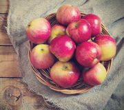 Fresh harvest of apples.Nature fruit concept Stock Photo