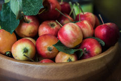 Fresh harvest of apples Stock Photo