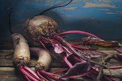 Fresh harvest of beets on a wooden background in dark tones. Close-up Royalty Free Stock Image