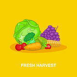 Fresh harvest concept, cartoon style Stock Images