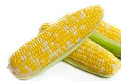 Fresh harvest corn Royalty Free Stock Image