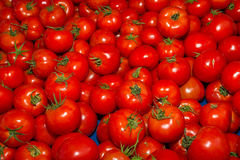 Fresh harvest of delicious tomatoes Stock Image