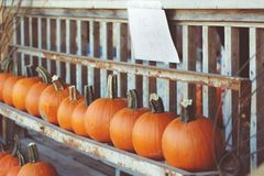 Fresh harvest farm pumpkins on shelf in market place, Halloween and Thanksgiving Royalty Free Stock Photography