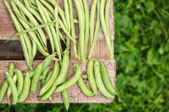 Fresh harvest of green beans and green peas. Fresh harvest green peas and green beans on a wooden table Royalty Free Stock Photography