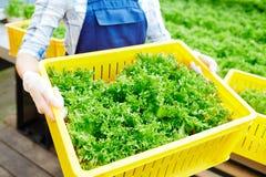 Fresh harvest Royalty Free Stock Photo
