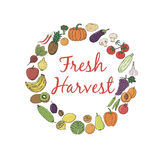 Fresh Harvest hand-sketched herbal vector frame. Royalty Free Stock Photo