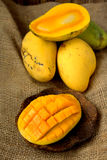 Fresh harvest mango. Fruit with classic wooden background Royalty Free Stock Photos