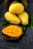 Fresh harvest mango Stock Photo