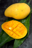 Fresh harvest mango. Fruit with classic wooden background Royalty Free Stock Photo