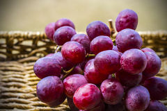 Fresh harvest of red grapes Royalty Free Stock Image