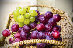 Fresh harvest of red grapes Stock Images