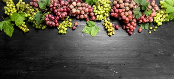 Fresh harvest of red and green grapes. Royalty Free Stock Photo