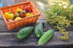 Fresh harvest of red and yellow tomatoes in a wicker basket on an old wooden table. Red gourd, vegetable set on an old wooden table basket with tomatoes. The Stock Photography