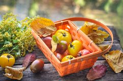 Fresh harvest of red and yellow tomatoes in a wicker basket on an old wooden table. Red gourd, vegetable set on an old wooden table basket with tomatoes. The Royalty Free Stock Image