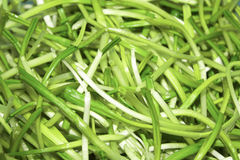 Fresh harvest of spring ramson or wild leek stems. A Fresh harvest of spring ramson or wild leek stems Stock Photo