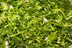 Fresh harvest of various salad greens Royalty Free Stock Images