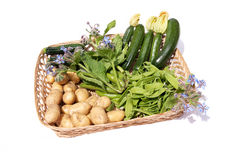 Fresh harvest vegetables in a basket Royalty Free Stock Photography